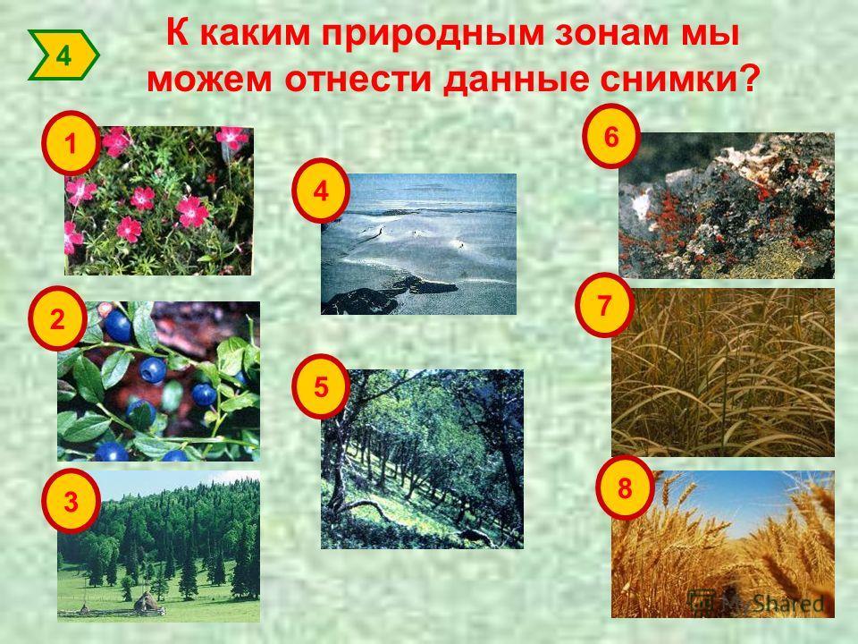К каким природным зонам мы можем отнести данные снимки? 1 2 3 4 5 6 7 8 4