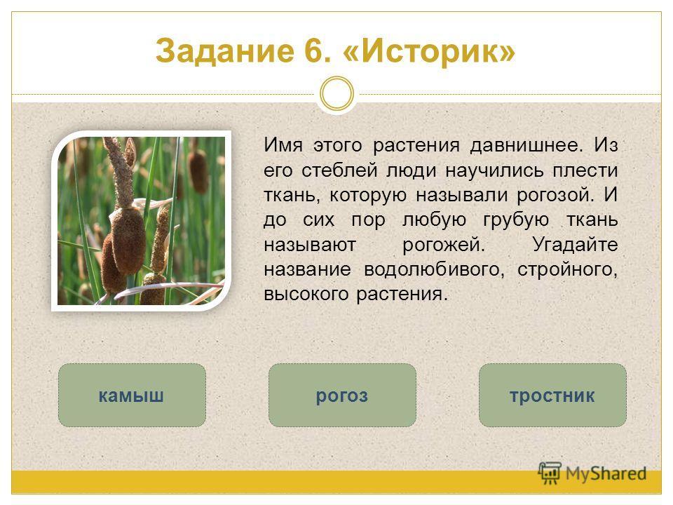 Задание 6. «Историк» Имя этого растения давнишнее. Из его стеблей люди научились плести ткань, которую называли рогозой. И до сих пор любую грубую ткань называют рогожей. Угадайте название водолюбивого, стройного, высокого растения. рогозкамыштростни