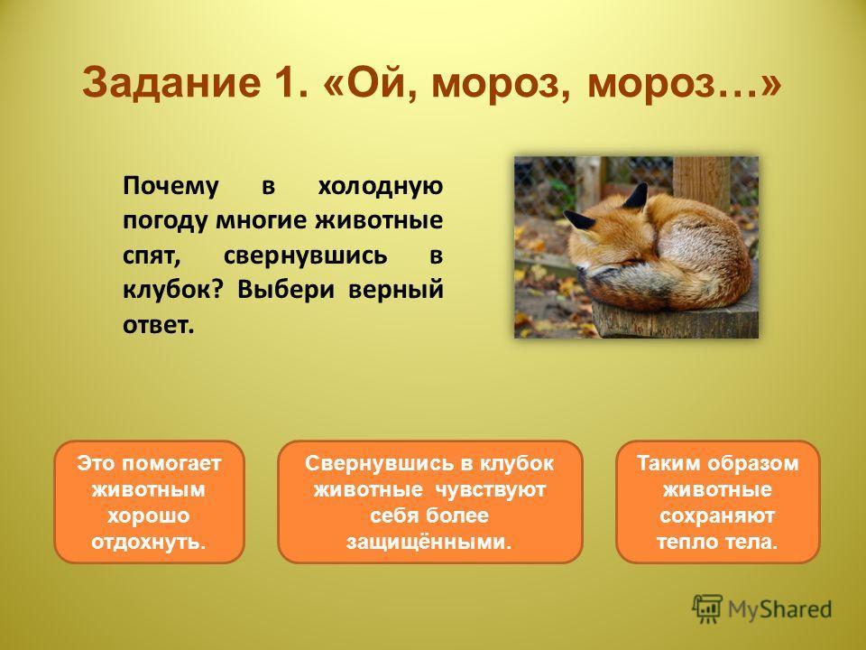 Задание 1. «Ой, мороз, мороз…» Почему в холодную погоду многие животные спят, свернувшись в клубок? Выбери верный ответ. Таким образом животные сохраняют тепло тела. Это помогает животным хорошо отдохнуть. Свернувшись в клубок животные чувствуют себя