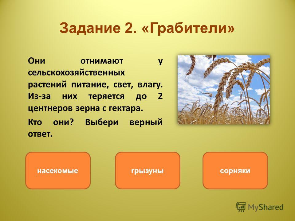 Задание 2. «Грабители» Они отнимают у сельскохозяйственных растений питание, свет, влагу. Из-за них теряется до 2 центнеров зерна с гектара. Кто они? Выбери верный ответ. сорнякигрызунынасекомые
