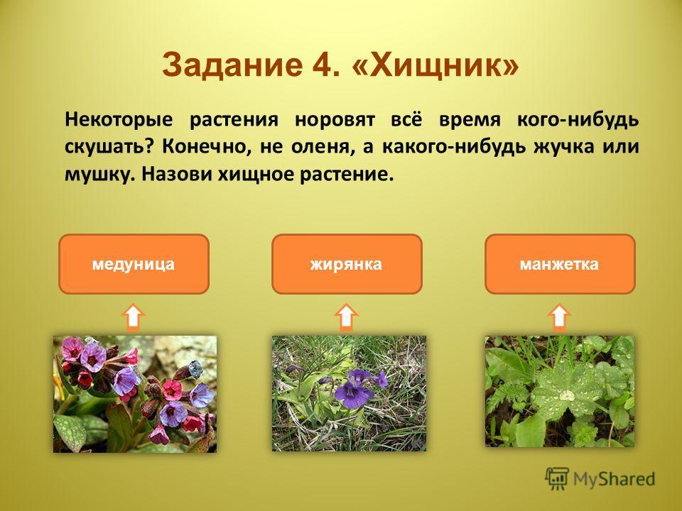 Задание 4. «Хищник» Некоторые растения норовят всё время кого-нибудь скушать? Конечно, не оленя, а какого-нибудь жучка или мушку. Назови хищное растение. жирянкамедуницаманжетка
