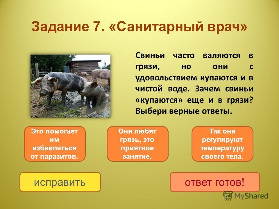Задание 7. «Санитарный врач» Свиньи часто валяются в грязи, но они с удовольствием купаются и в чистой воде. Зачем свиньи «купаются» еще и в грязи? Выбери верные ответы. Это помогает им избавляться от паразитов. Так они регулируют температуру своего