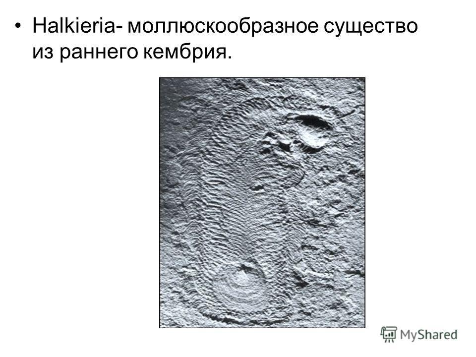 Halkieria- моллюскообразное существо из раннего кембрия.