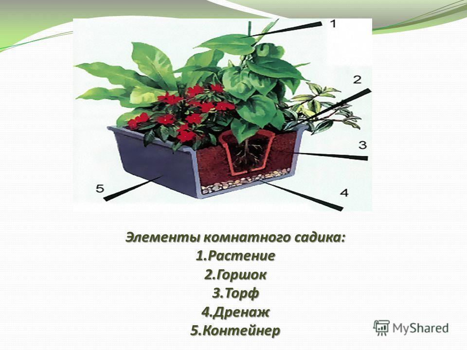 Элементы комнатного садика: 1.Растение 2.Горшок 3.Торф 4.Дренаж 5.Контейнер