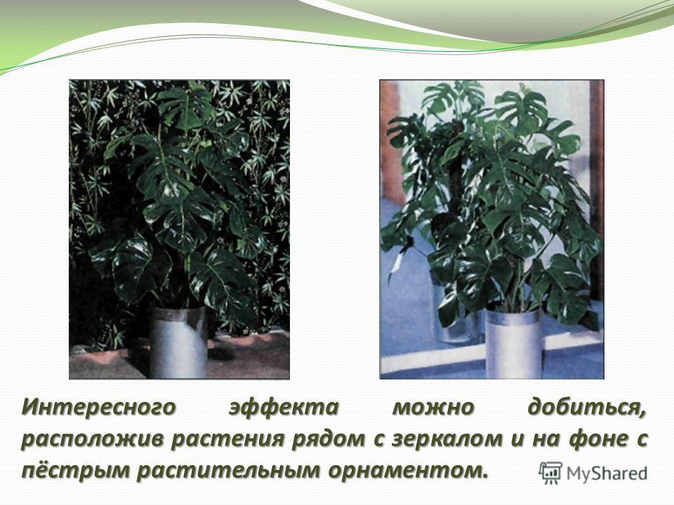 Интересного эффекта можно добиться, расположив растения рядом с зеркалом и на фоне с пёстрым растительным орнаментом.