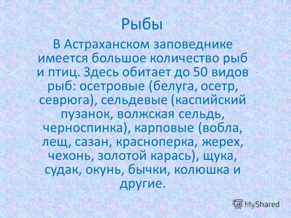 Рыбы В Астраханском заповеднике имеется большое количество рыб и птиц. Здесь обитает до 50 видов рыб: осетровые (белуга, осетр, севрюга), сельдевые (каспийский пузанок, волжская сельдь, черноспинка), карповые (вобла, лещ, сазан, красноперка, жерех, ч