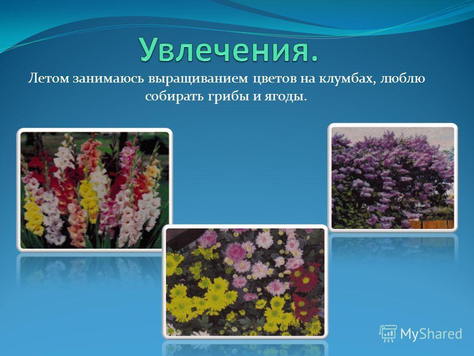 Летом занимаюсь выращиванием цветов на клумбах, люблю собирать грибы и ягоды.