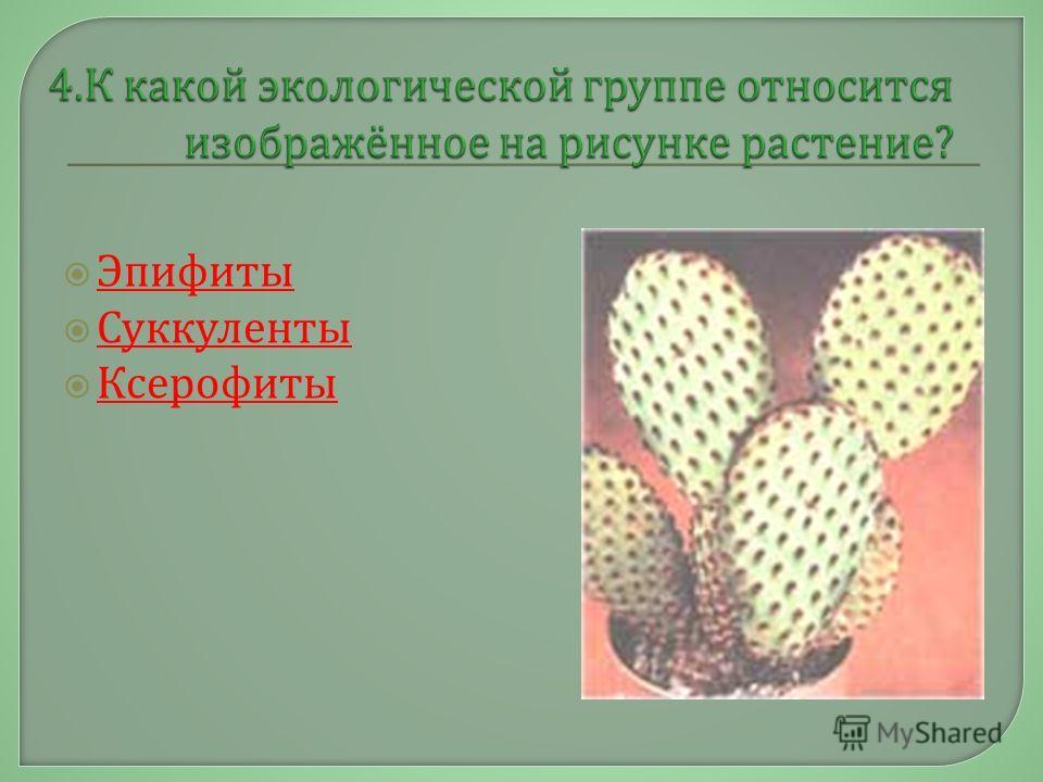Эпифиты Суккуленты Ксерофиты