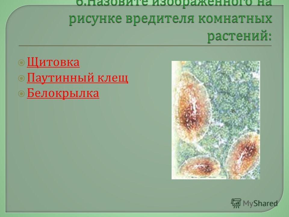 Щитовка Паутинный клещ Паутинный клещ Белокрылка