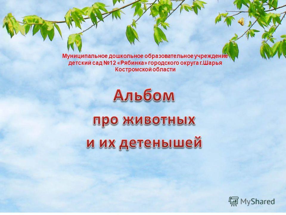 Муниципальное дошкольное образовательное учреждение детский сад 12 «Рябинка» городского округа г.Шарья Костромской области