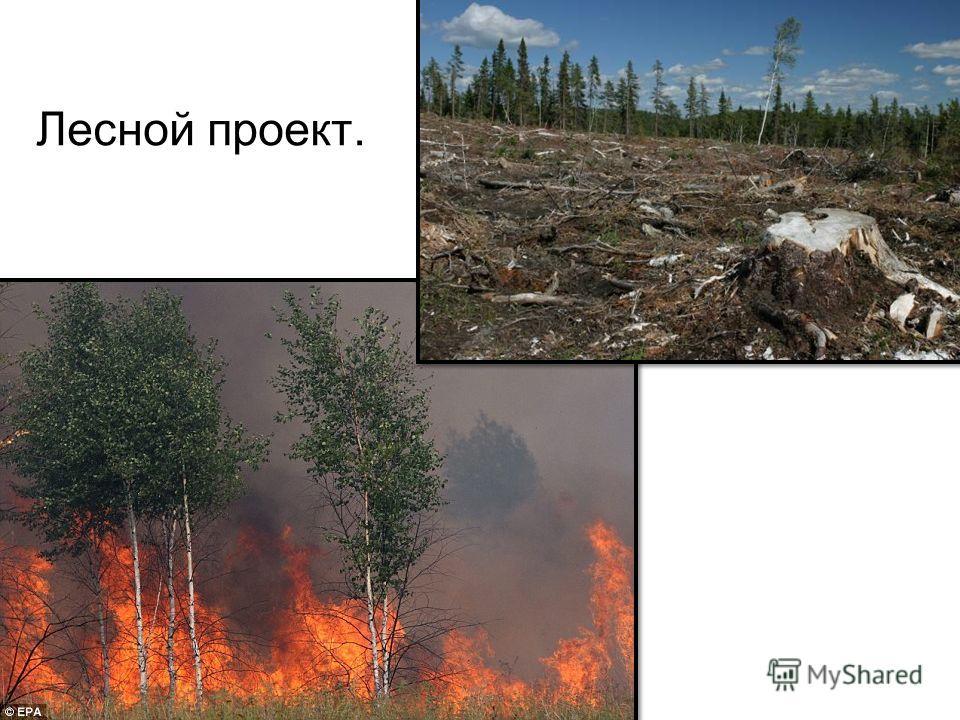 Лесной проект.