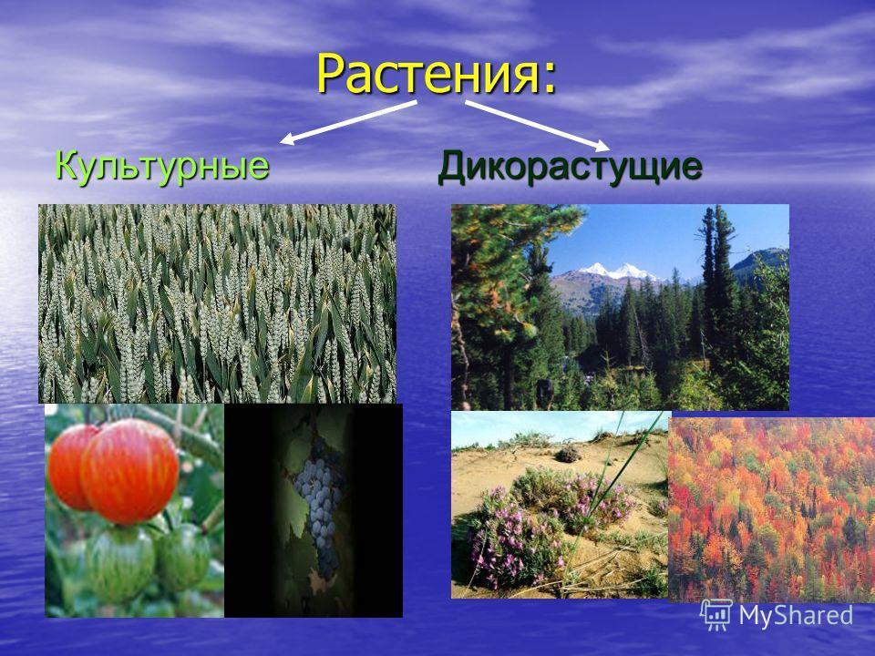 Растения: Культурные Дикорастущие