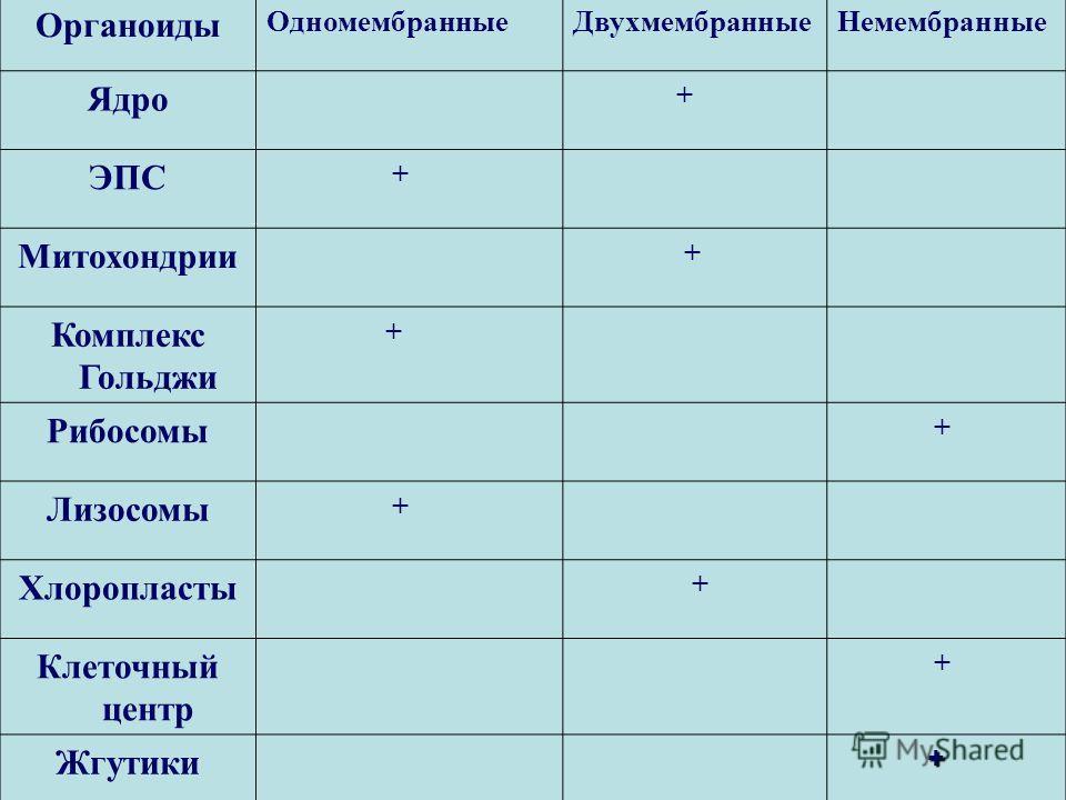 Органоиды ОдномембранныеДвухмембранныеНемембранные Ядро + ЭПС + Митохондрии + Комплекс Гольджи + Рибосомы + Лизосомы + Хлоропласты + Клеточный центр + Жгутики +