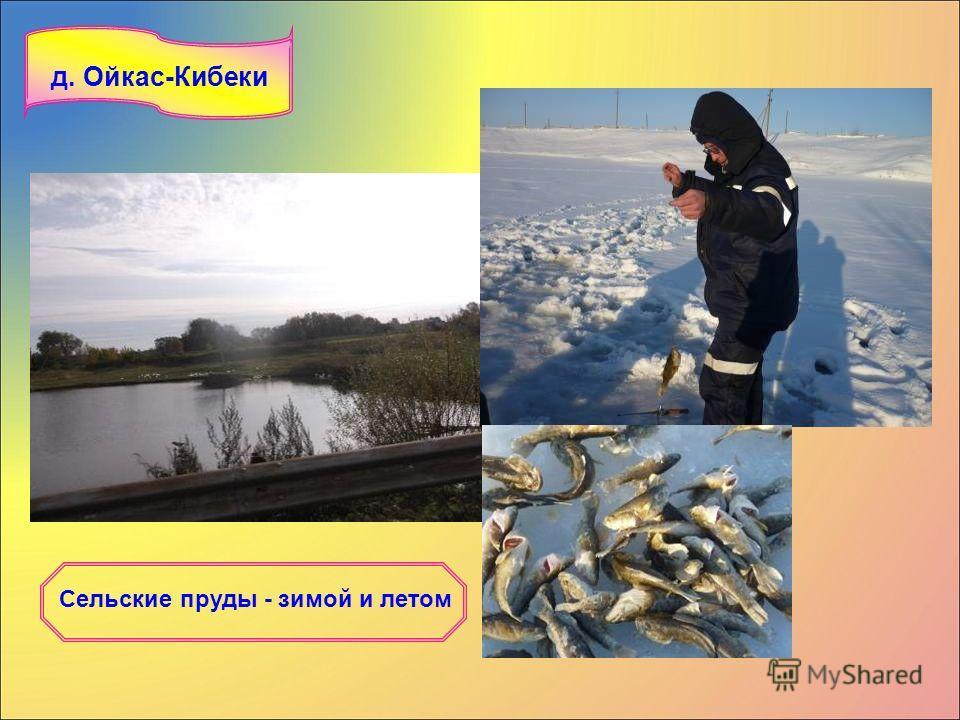 Сельские пруды - зимой и летом