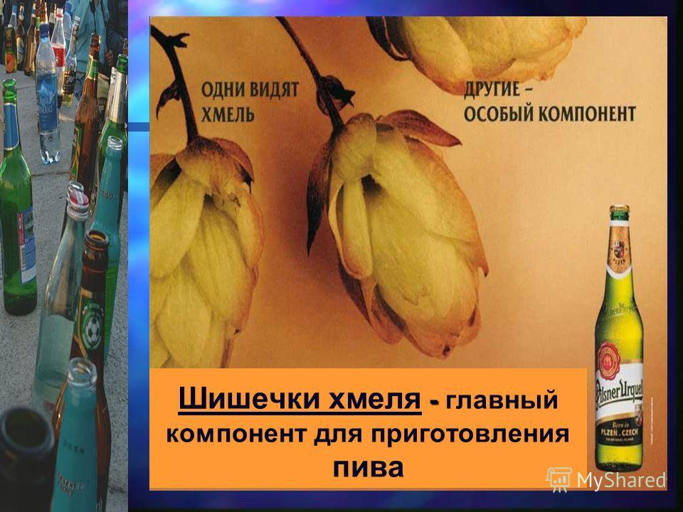 - Шишечки хмеля - главный компонент для приготовления пива