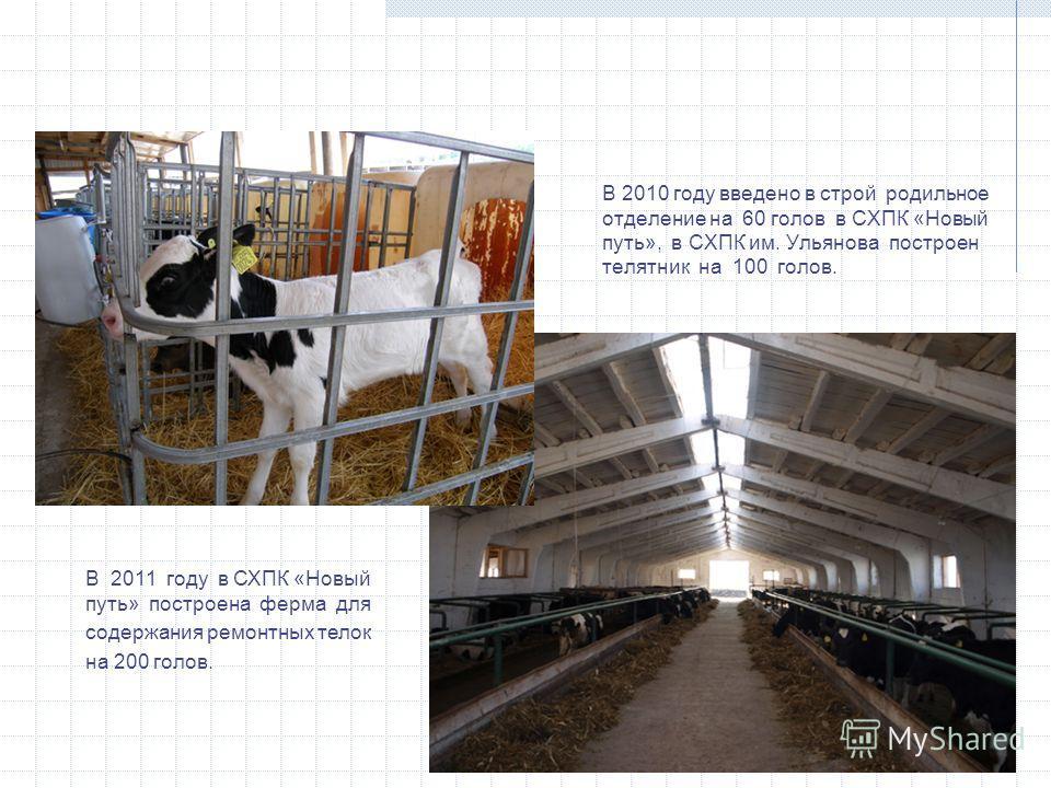 В 2010 году введено в строй родильное отделение на 60 голов в СХПК «Новый путь», в СХПК им. Ульянова построен телятник на 100 голов. В 2011 году в СХПК «Новый путь» построена ферма для содержания ремонтных телок на 200 голов.