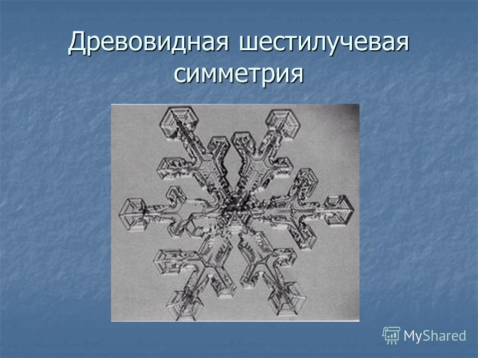 Древовидная шестилучевая симметрия