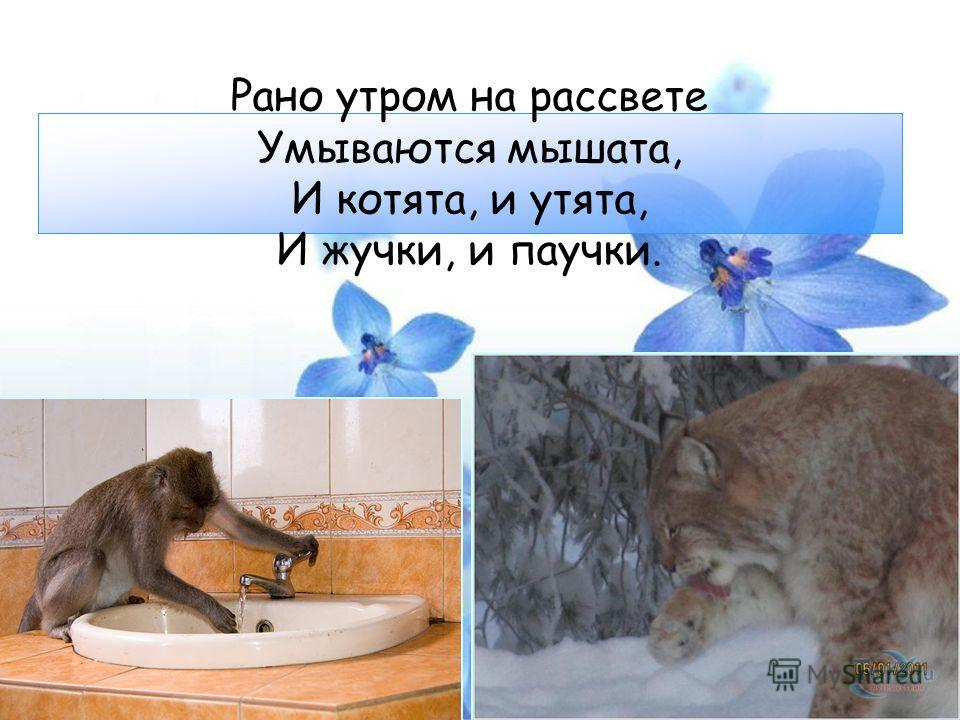 Рано утром на рассвете Умываются мышата, И котята, и утята, И жучки, и паучки.