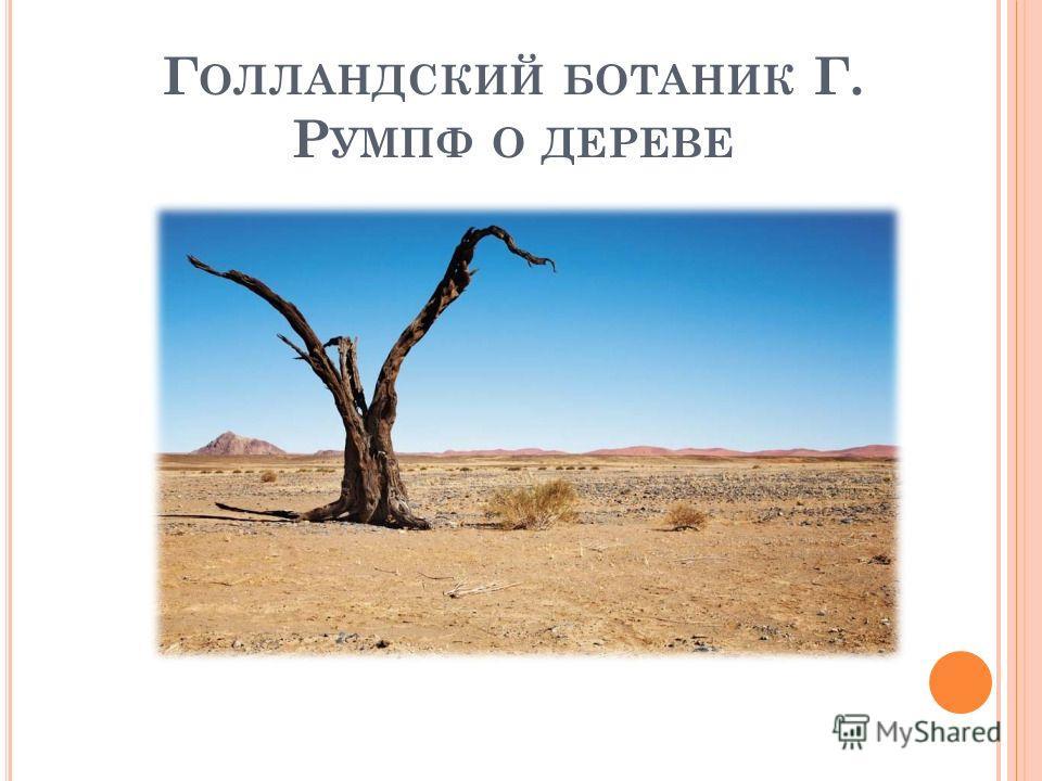 Г ОЛЛАНДСКИЙ БОТАНИК Г. Р УМПФ О ДЕРЕВЕ
