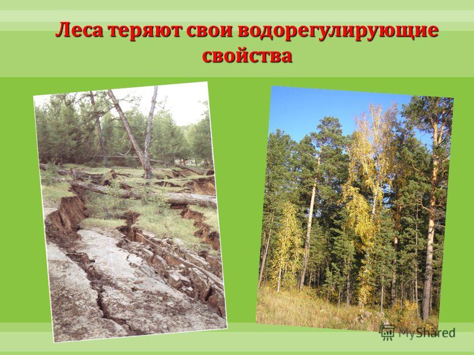 Леса теряют свои водорегулирующие свойства