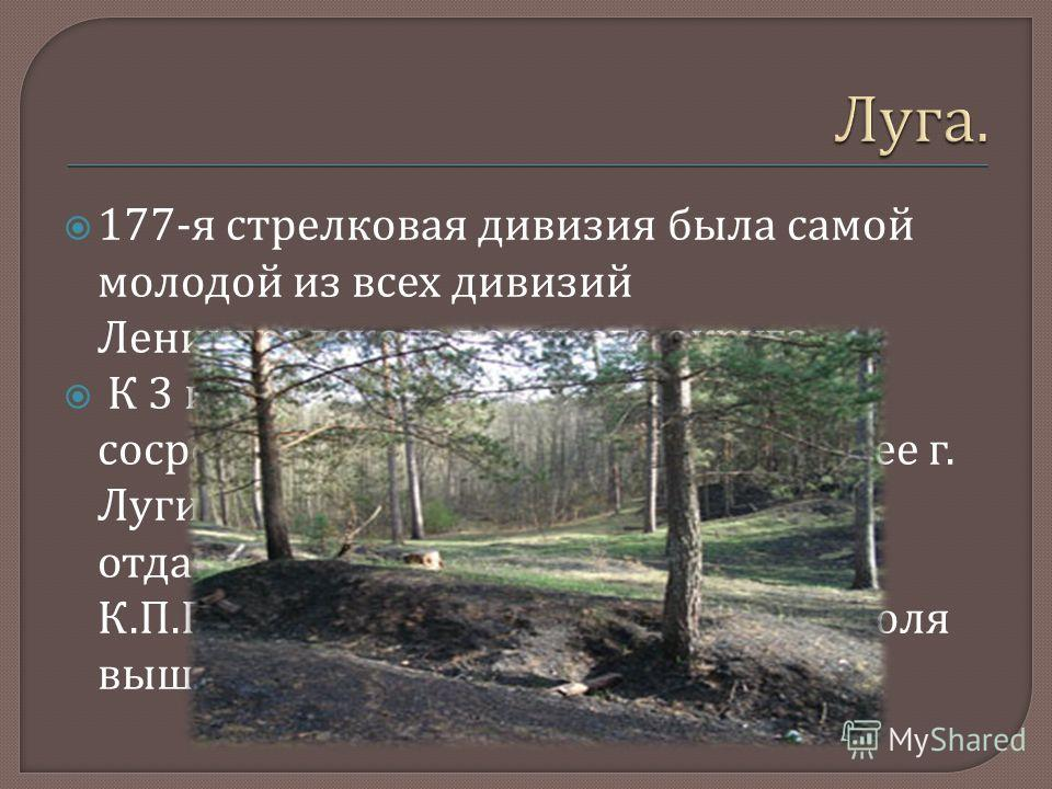 177- я стрелковая дивизия была самой молодой из всех дивизий Ленинградского военного округа. К 3 июля дивизия полностью сосредоточилась в лесах юго - западнее г. Луги. Согласно устному приказанию, отданному 5 июля генералом К. П. Пядышевым, дивизия к
