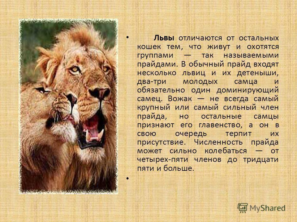 Львы отличаются от остальных кошек тем, что живут и охотятся группами так называемыми прайдами. В обычный прайд входят несколько львиц и их детеныши, два-три молодых самца и обязательно один доминирующий самец. Вожак не всегда самый крупный или самый