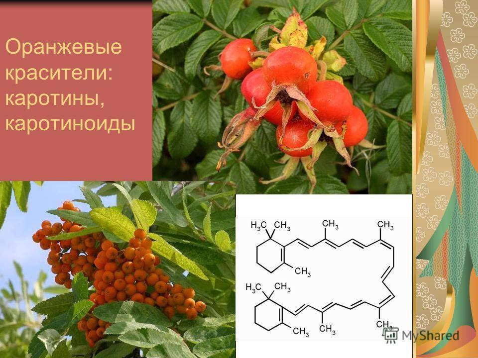 Оранжевые красители: каротины, каротиноиды