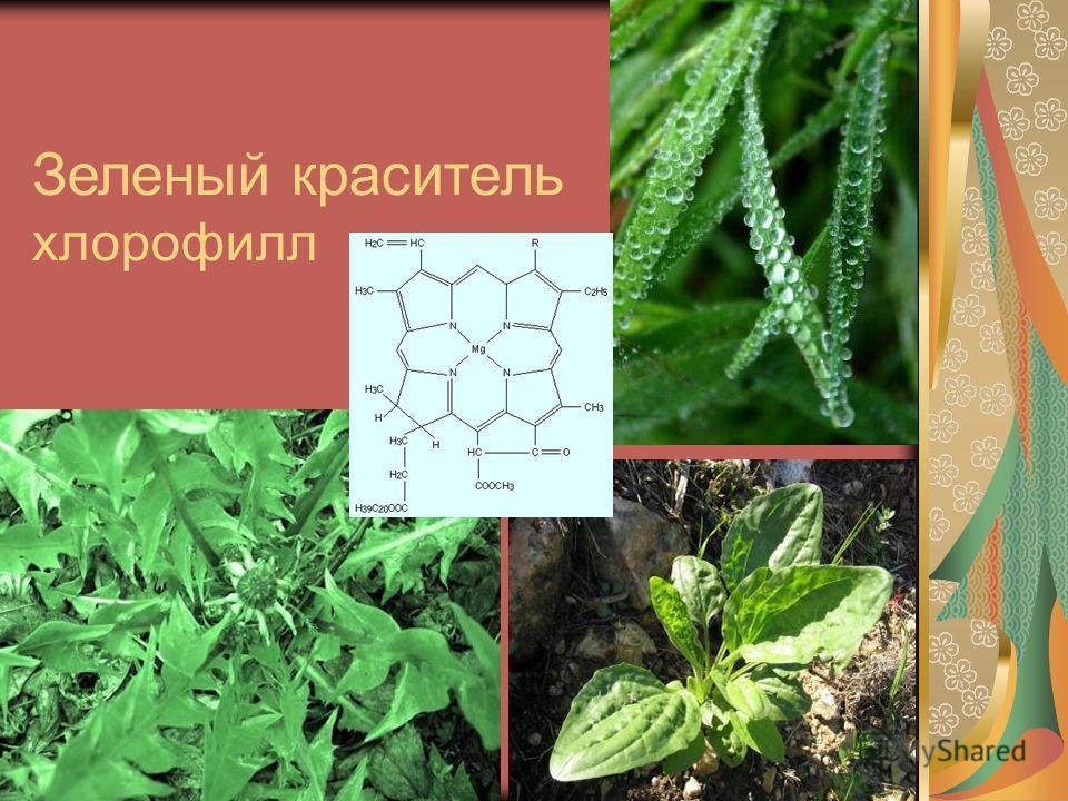 Зеленый краситель хлорофилл