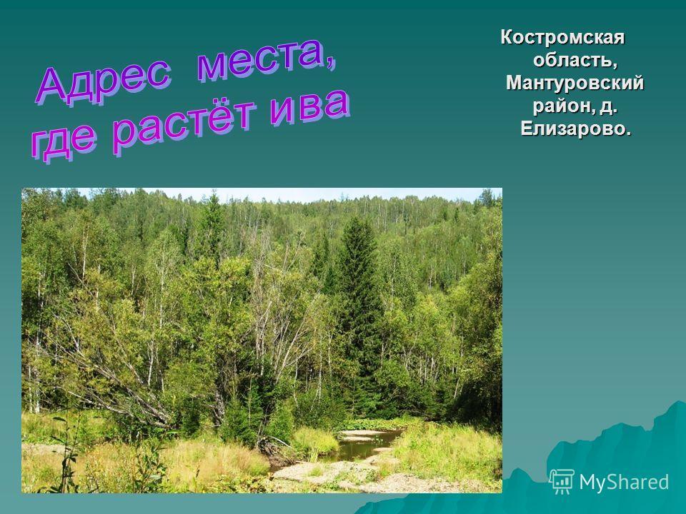 Костромская область, Мантуровский район, д. Елизарово.