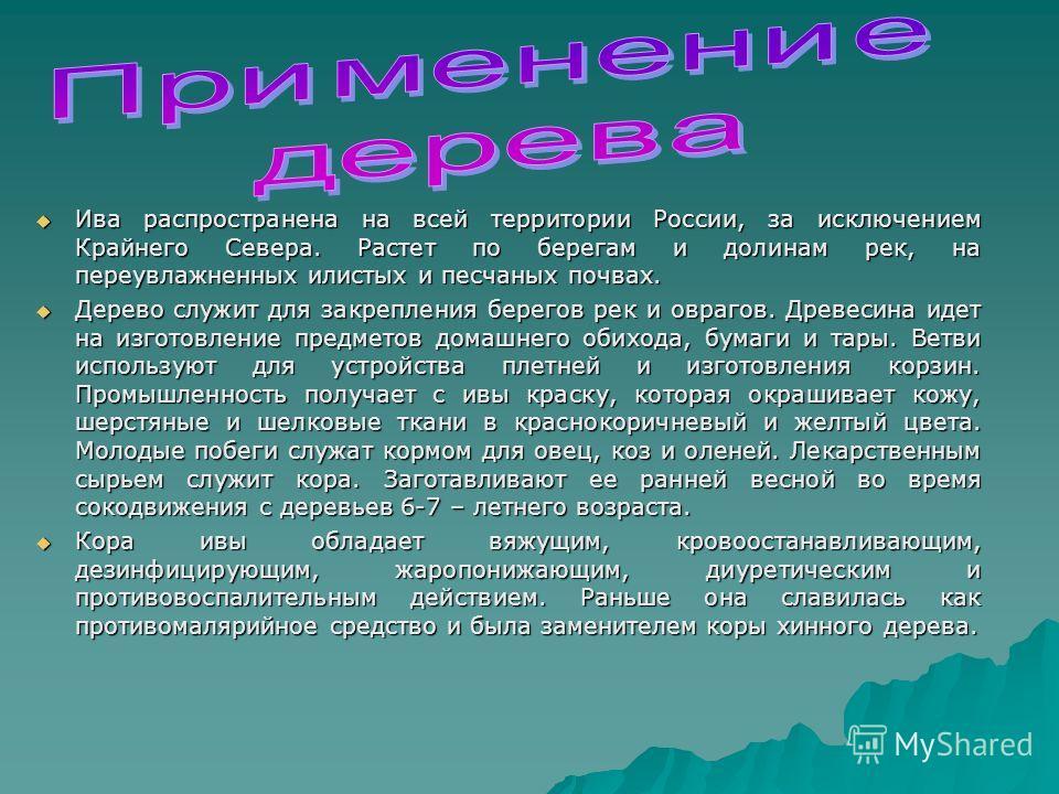 Ива распространена на всей территории России, за исключением Крайнего Севера. Растет по берегам и долинам рек, на переувлажненных илистых и песчаных почвах. Ива распространена на всей территории России, за исключением Крайнего Севера. Растет по берег