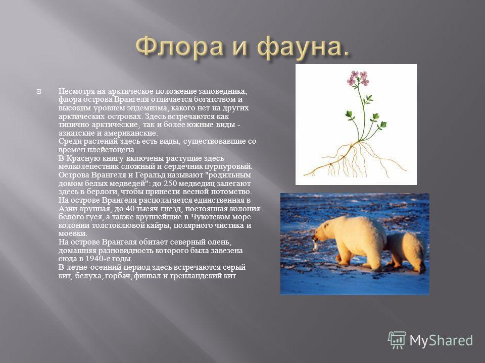 Несмотря на арктическое положение заповедника, флора острова Врангеля отличается богатством и высоким уровнем эндемизма, какого нет на других арктических островах. Здесь встречаются как типично арктические, так и более южные виды - азиатские и америк