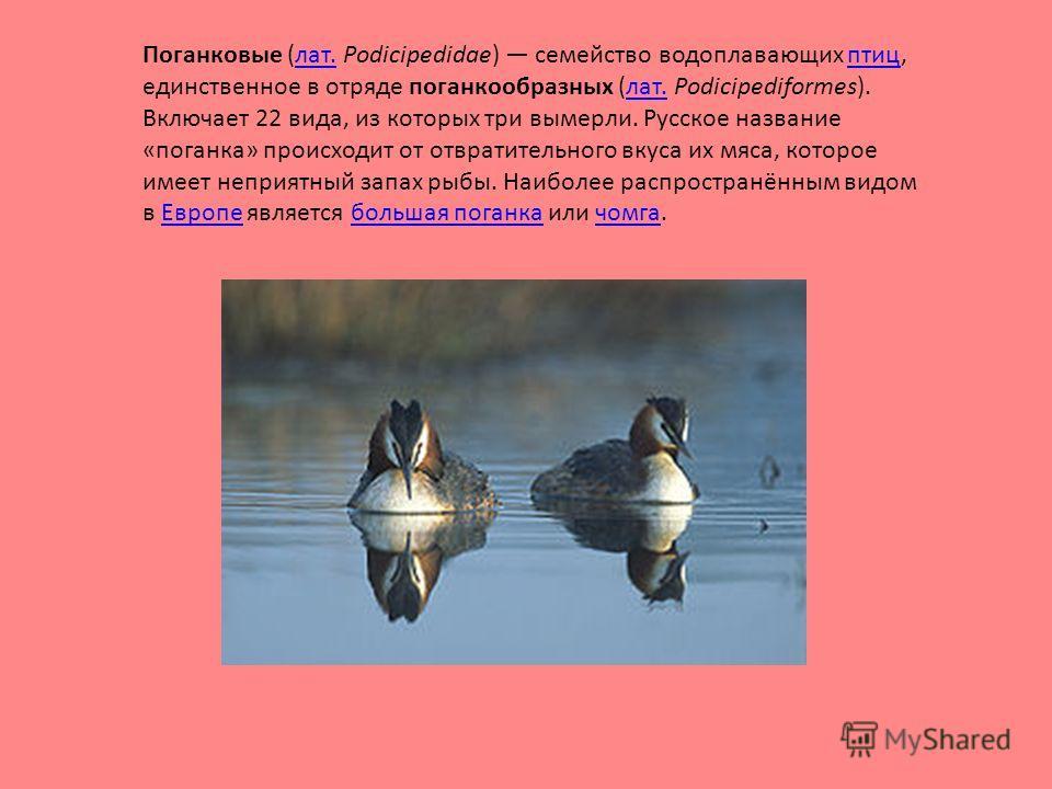 Поганковые (лат. Podicipedidae) семейство водоплавающих птиц, единственное в отряде поганкообразных (лат. Podicipediformes). Включает 22 вида, из которых три вымерли. Русское название «поганка» происходит от отвратительного вкуса их мяса, которое име
