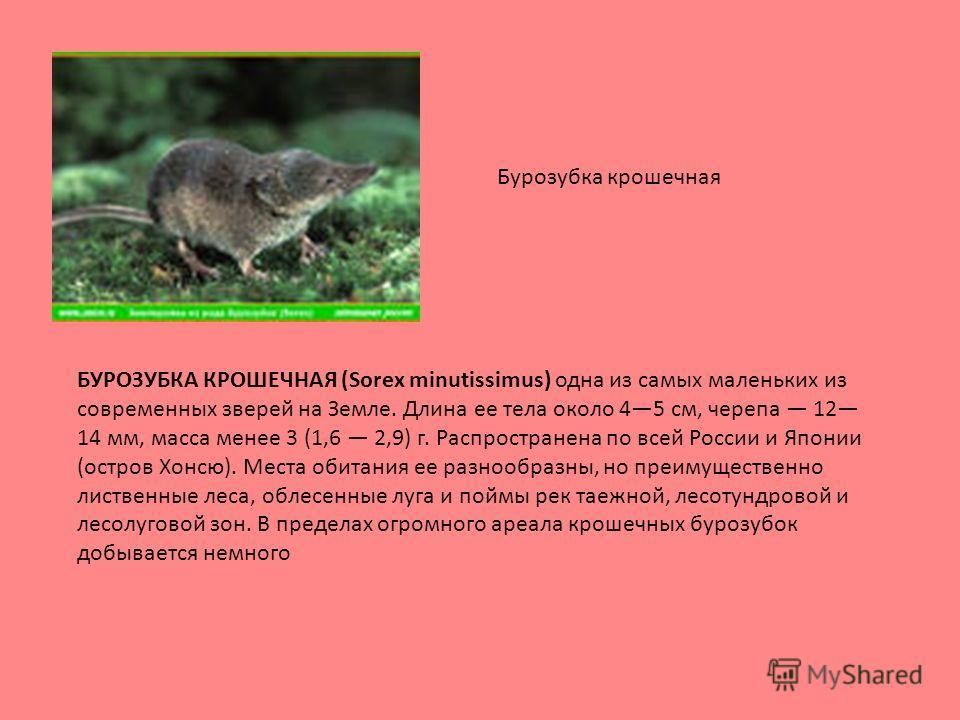 БУРОЗУБКА КРОШЕЧНАЯ (Sorex minutissimus) одна из самых маленьких из современных зверей на Земле. Длина ее тела около 45 см, черепа 12 14 мм, масса менее 3 (1,6 2,9) г. Распространена по всей России и Японии (остров Хонсю). Места обитания ее разнообра