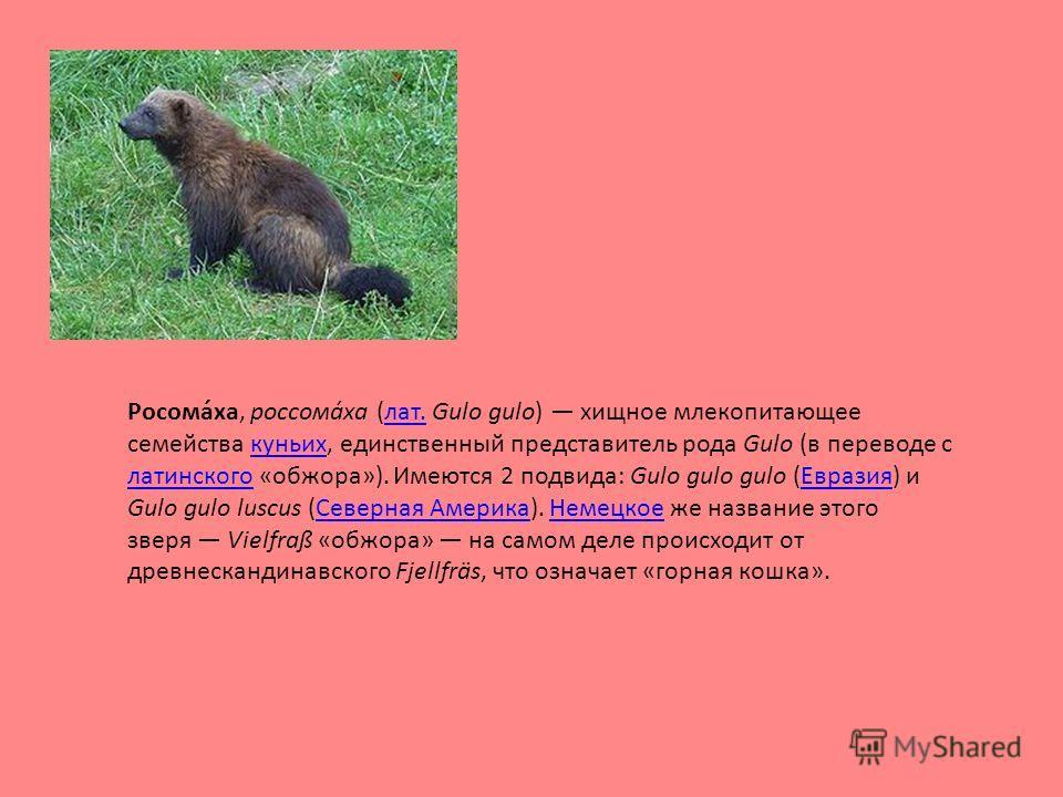 Росома́ха, россома́ха (лат. Gulo gulo) хищное млекопитающее семейства куньих, единственный представитель рода Gulo (в переводе с латинского «обжора»). Имеются 2 подвида: Gulo gulo gulo (Евразия) и Gulo gulo luscus (Северная Америка). Немецкое же назв