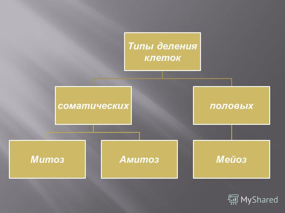 Типы деления клеток соматических МитозАмитоз половых Мейоз