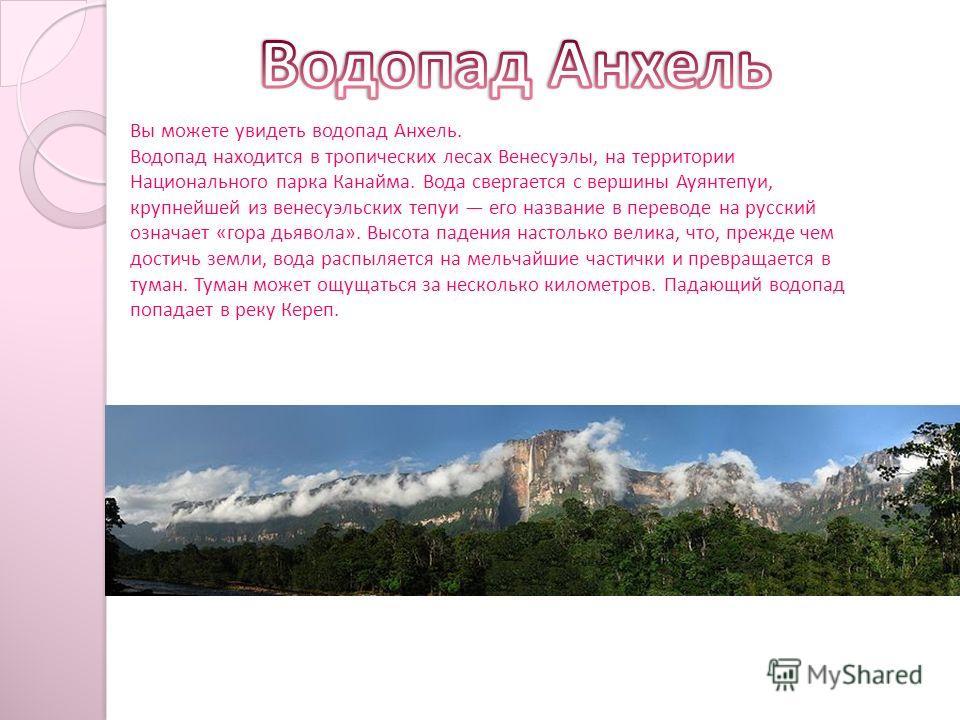 Вы можете увидеть водопад Анхель. Водопад находится в тропических лесах Венесуэлы, на территории Национального парка Канайма. Вода свергается с вершины Ауянтепуи, крупнейшей из венесуэльских тепуи его название в переводе на русский означает «гора дья