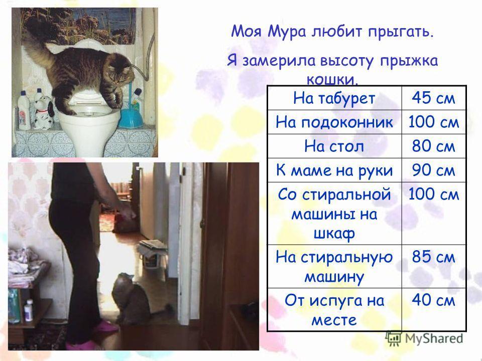 Моя Мура любит прыгать. Я замерила высоту прыжка кошки. На табурет45 см На подоконник100 см На стол80 см К маме на руки90 см Со стиральной машины на шкаф 100 см На стиральную машину 85 см От испуга на месте 40 см