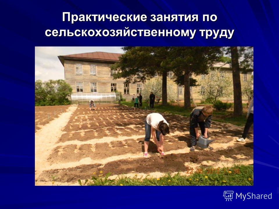 Практические занятия по сельскохозяйственному труду