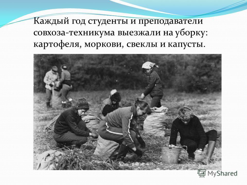 Каждый год студенты и преподаватели совхоза-техникума выезжали на уборку: картофеля, моркови, свеклы и капусты.