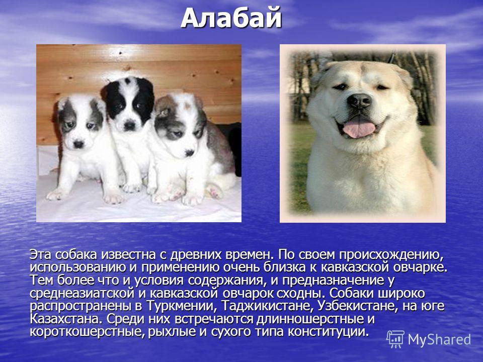 Презентация О Породах Собаках