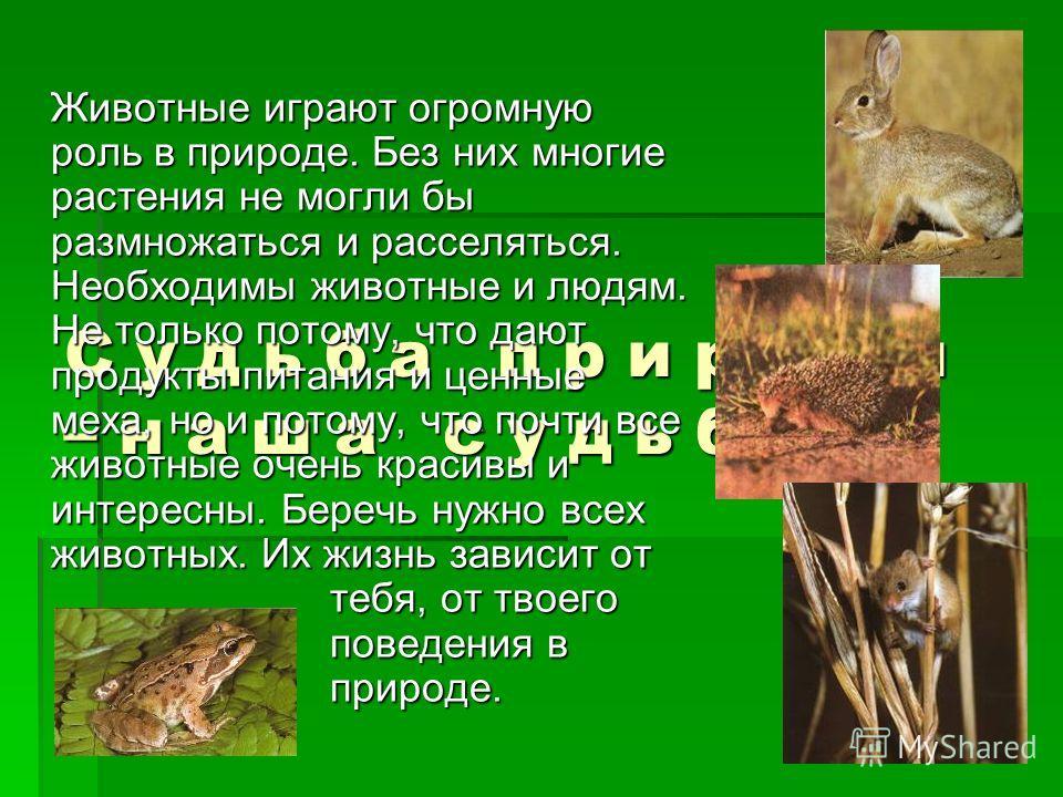 С у д ь б а п р и р о д ы – н а ш а с у д ь б а ! Животные играют огромную роль в природе. Без них многие растения не могли бы размножаться и расселяться. Необходимы животные и людям. Не только потому, что дают продукты питания и ценные меха, но и по