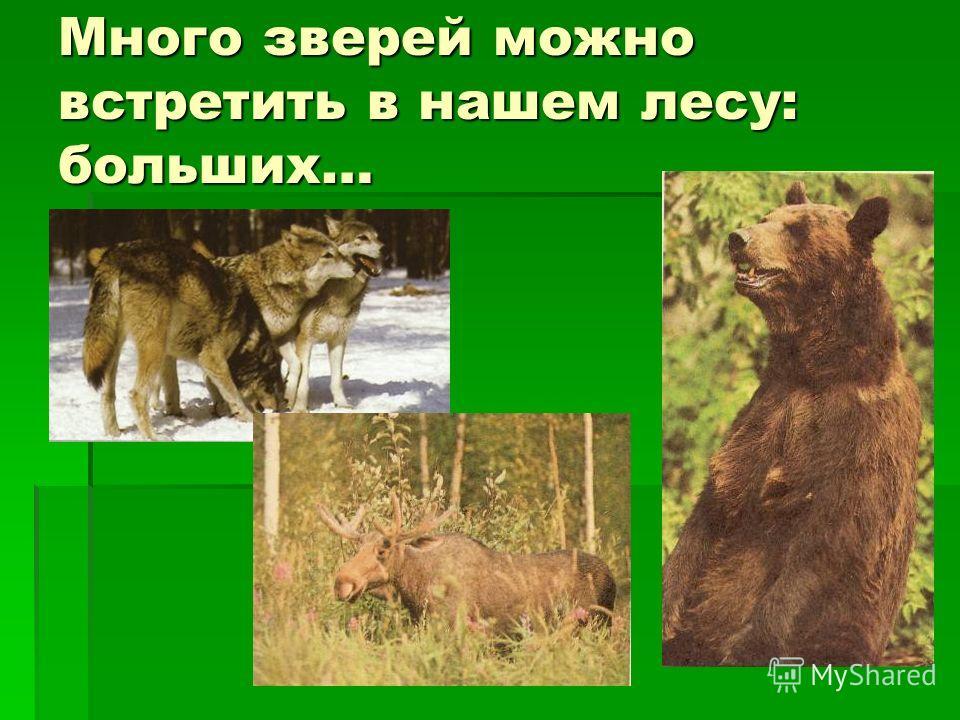 Много зверей можно встретить в нашем лесу: больших…