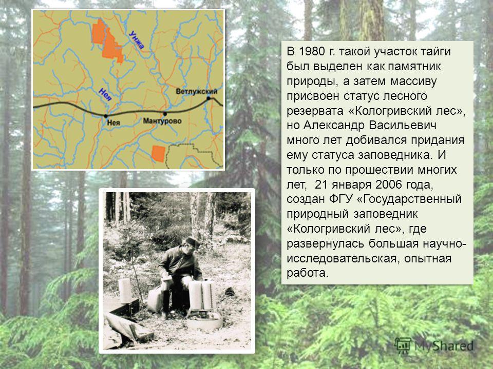В 1980 г. такой участок тайги был выделен как памятник природы, а затем массиву присвоен статус лесного резервата «Кологривский лес», но Александр Васильевич много лет добивался придания ему статуса заповедника. И только по прошествии многих лет, 21