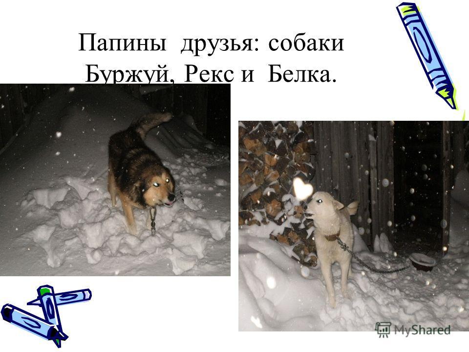 Папины друзья: собаки Буржуй, Рекс и Белка.