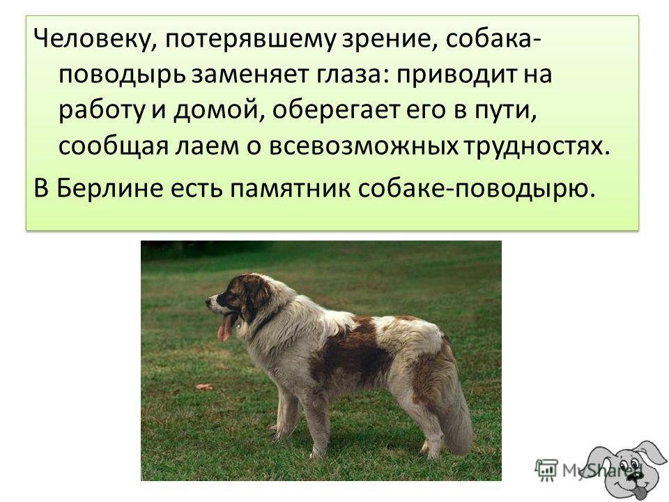 Человеку, потерявшему зрение, собака- поводырь заменяет глаза: приводит на работу и домой, оберегает его в пути, сообщая лаем о всевозможных трудностях. В Берлине есть памятник собаке-поводырю. Человеку, потерявшему зрение, собака- поводырь заменяет
