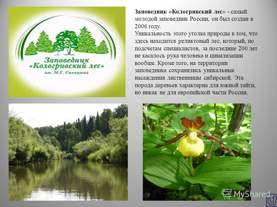 Заповедник «Кологривский лес» - самый молодой заповедник России, он был создан в 2006 году. Уникальность этого уголка природы в том, что здесь находится реликтовый лес, который, по подсчетам специалистов, за последние 200 лет не касалось рука человек