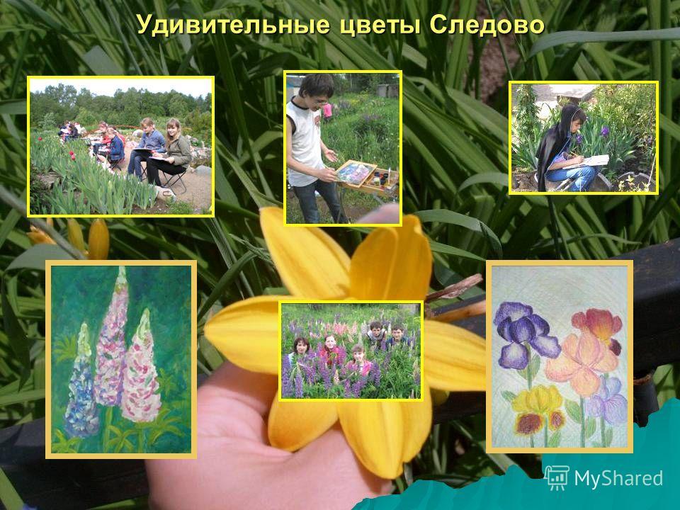 Удивительные цветы Следово