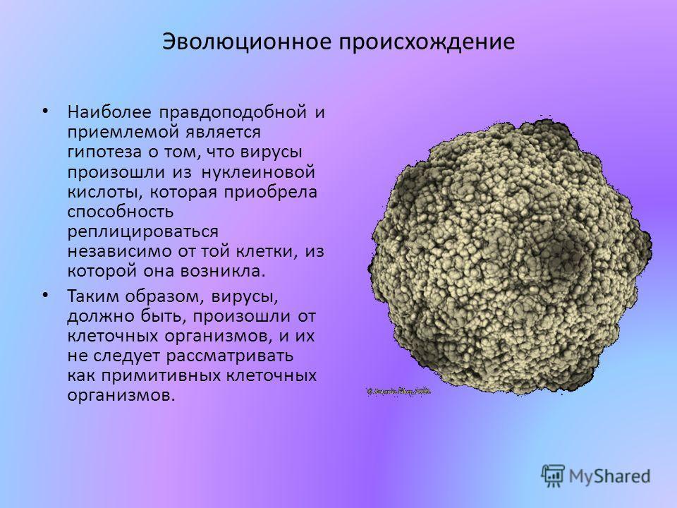 Эволюционное происхождение Наиболее правдоподобной и приемлемой является гипотеза о том, что вирусы произошли из нуклеиновой кислоты, которая приобрела способность реплицироваться независимо от той клетки, из которой она возникла. Таким образом, виру