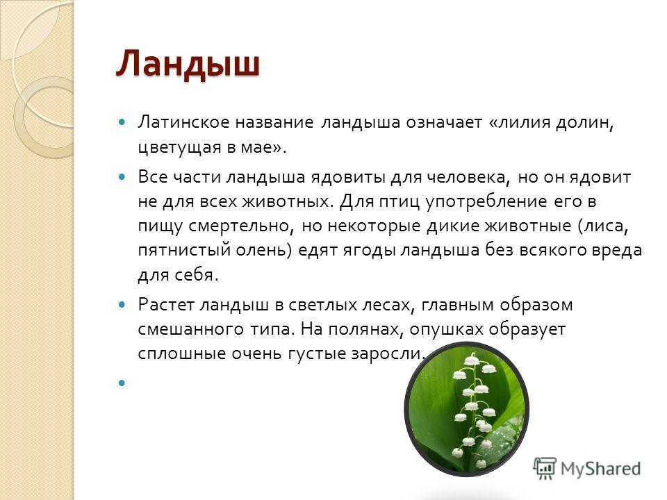 Ландыш Латинское название ландыша означает « лилия долин, цветущая в мае ». Все части ландыша ядовиты для человека, но он ядовит не для всех животных. Для птиц употребление его в пищу смертельно, но некоторые дикие животные ( лиса, пятнистый олень )