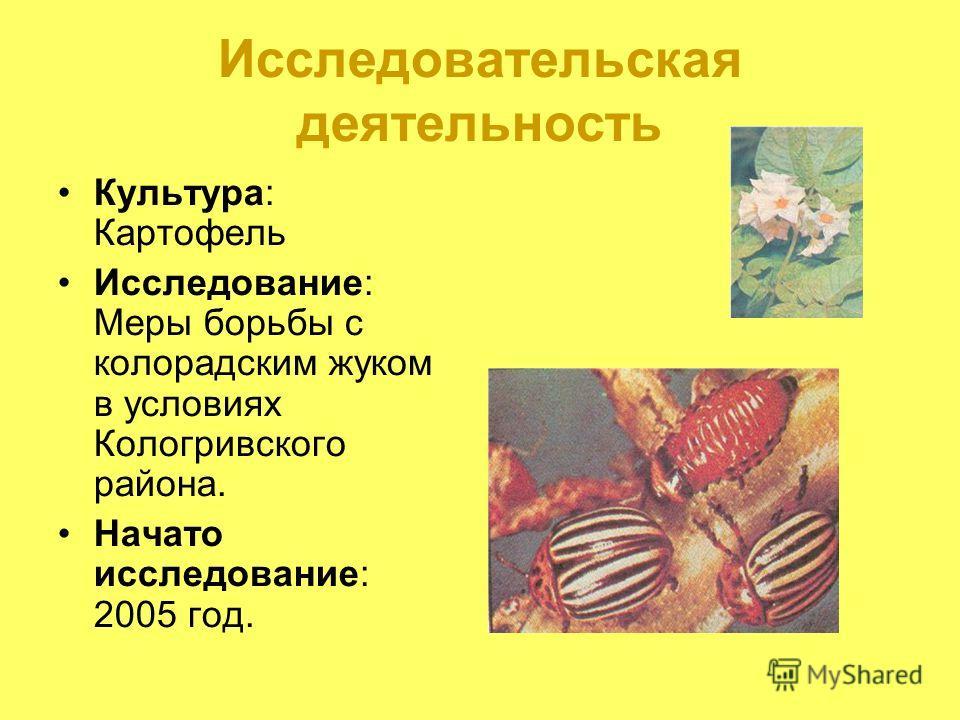 Исследовательская деятельность Культура: Картофель Исследование: Меры борьбы с колорадским жуком в условиях Кологривского района. Начато исследование: 2005 год.